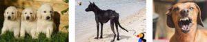 съновник куче ухапване кучета убивам