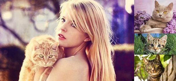 Във всеки съновник има тълкувания на сънищата с котка, а в древен Египет те са били считани за откриването от боговете какви желания имат