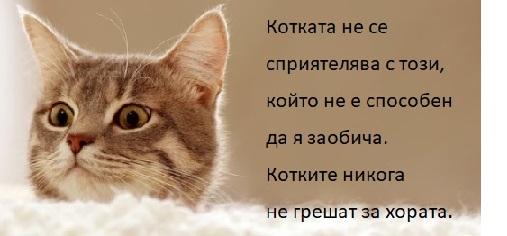 цитати за приятелството, мисли за приятелството