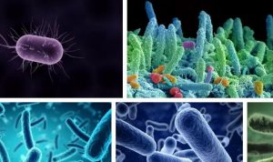 Видове бактерии