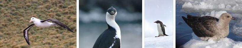 птиците на антарктида
