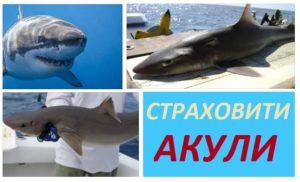 Защо Черно море е защитено от акули?