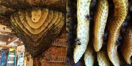 пчелите са друга цивилизация
