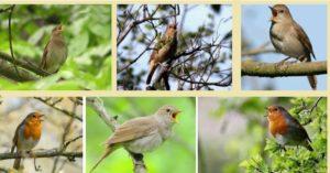 Тишината и птиците лекуват и подобряват имунитета